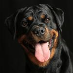 Fotografie vom Hund Gottstein Ihr Fotograf in Halle/Saale