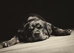 Foto von einen süßen Hund