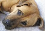 Mischlingshund Clliff ganz entspannt