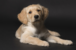 Fotografie-Tiere-Tierfotografie-Hunde