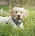 Sookie-Hundefotos