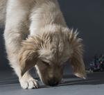 Sookie-Hundefotos-Tierfotografie