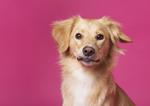 Sookie und Rosa - Hundefotografie Halle - Tierfoto